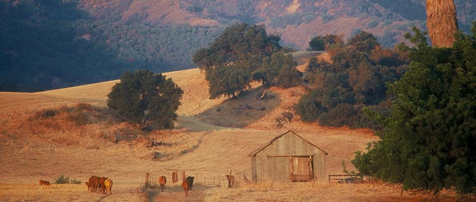 Ojai valley directory coupons